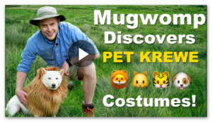 WIN Pet Krewe Dog & Cat Costumes